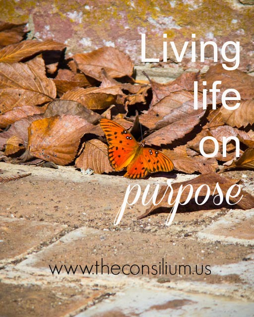 Lynn Morrisey on living life with purpose for the consilium